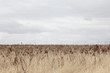 Outback Landscape