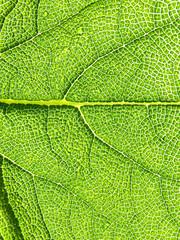 Green leaf texture, macro. 3