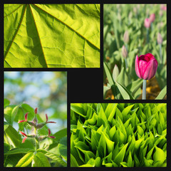 A collage of decorative plants