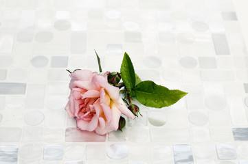 regennaße Rose