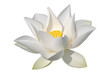 Leinwanddruck Bild - White lotus, isolated, clipping path included