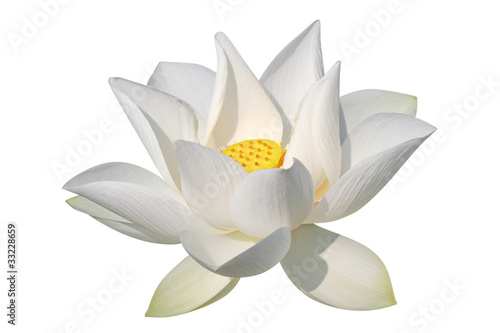 Papiers peints Fleur de lotus White lotus, isolated, clipping path included