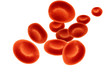 red blood cells - 33230210