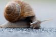 Snai closeup