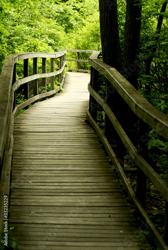 Wooden bridge through the forest