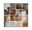 Photo composition of a cat's head made with various cats