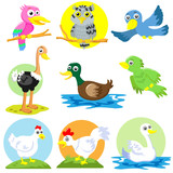 bird and  poultry cartoon set poster