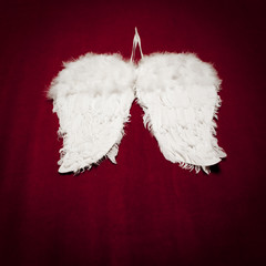 angel's wings on red velvet background