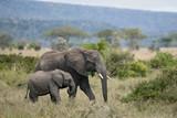 Fototapeta Serengeti - afryka - Dziki Ssak