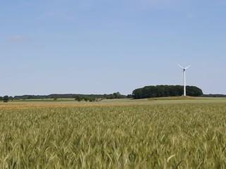Feld und Windrad