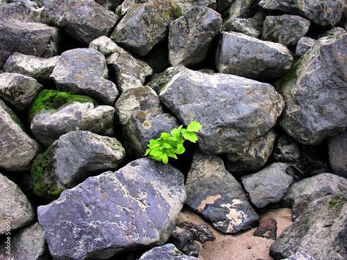 aus dem Stein