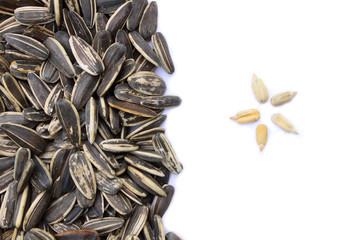Sunflower grains and husked seeds
