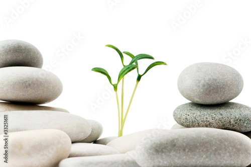 Pebbles and seedlings - alternative medicine concept