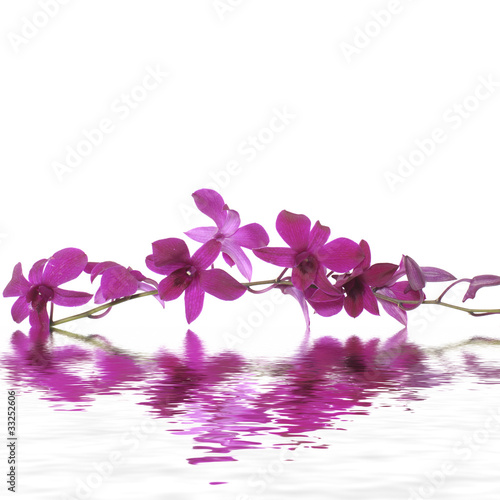 Pink orchid flower in water