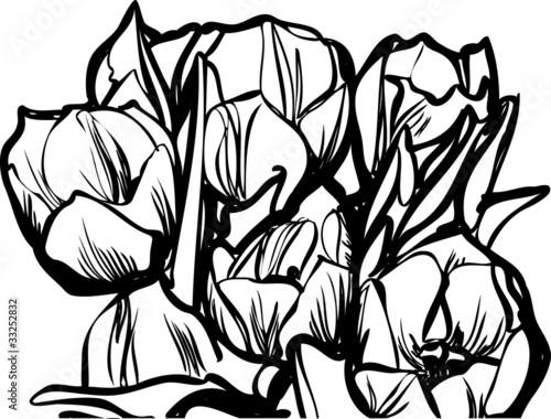 sketch a bouquet of tulips on a white background