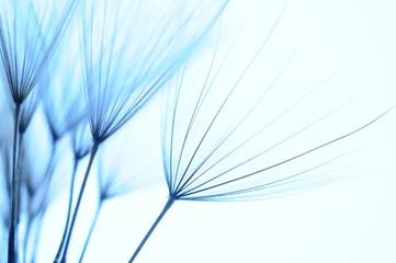 dandelion seeds © Hassan Akkas Reine