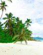 Bay Dream Jungle