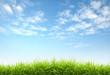 fresh spring grass - 33279870