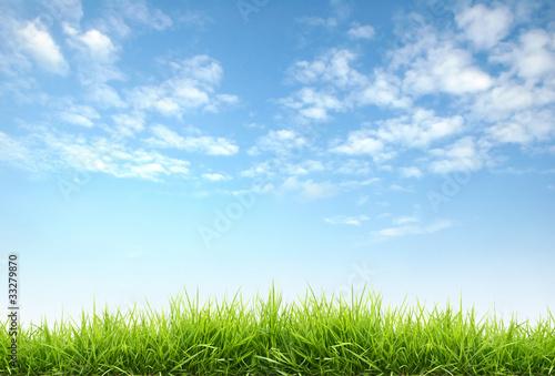 fresh spring grass