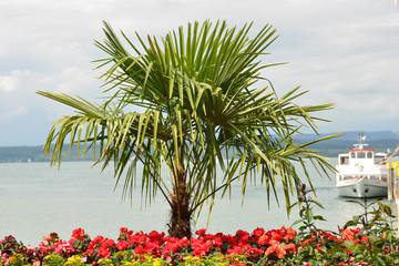 Südseefeeling im Hafen der Blumeninsel Mainau