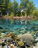Mangrove ecosystem poster