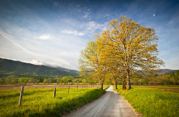 Cade's Cove Dirt Road Hyatt Lane in Spring in Smoky Mountains