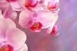 Orchidee, Blüten