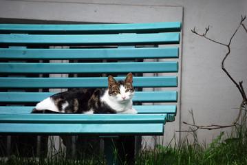 Katze auf einer Parkbank