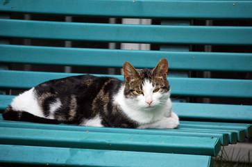 Katze auf einer Bank