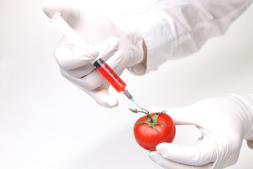 Chemsiche Manipulaton einer Tomate mit Spritze im Labor