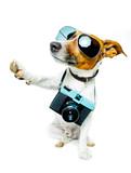 dog photo camera - Fine Art prints