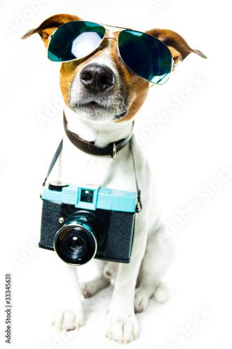 Pes fotoaparát