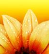 Abstract flower petals