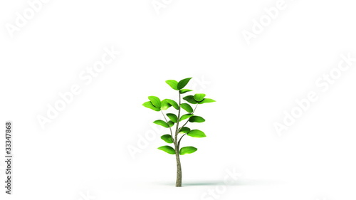 Green leafs tree growing, HD, alpha
