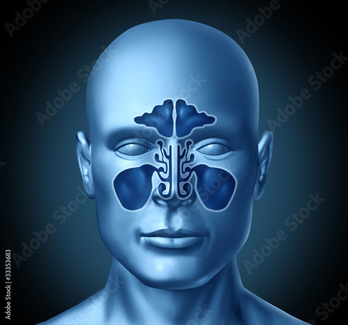 Sinus cavity on a human head