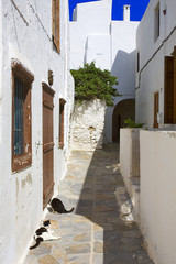 grèce,cyclades,naxos : village de chora, ruelle aux chats