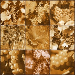 Vines in Sepia
