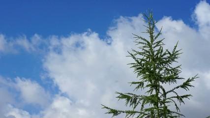 Wolken & Baum