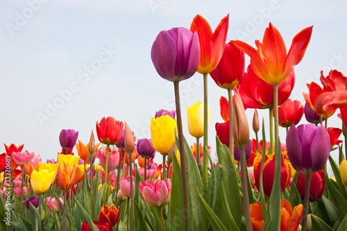 Beautiful multi coloured flowers with copyspace for text