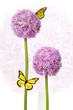 Blumenblüte Allium