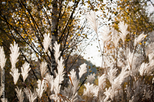 Autumn atmosphere- leaves, grass and breeze