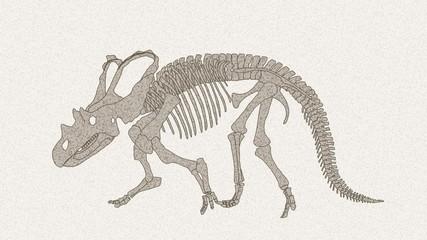 ケラトプスの化石01