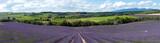 Fototapety champ de lavande - Provence