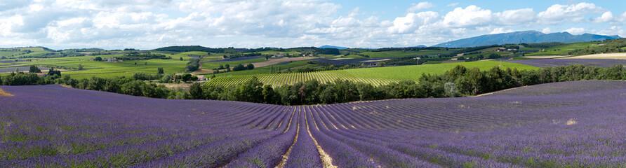 champ de lavande - Provence