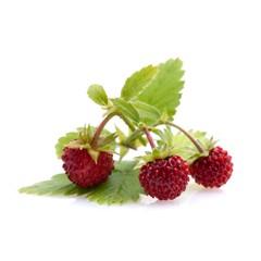 Wald - Erdbeeren