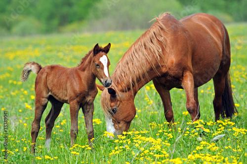 In de dag Paarden Horse