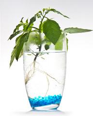 Plants & Water