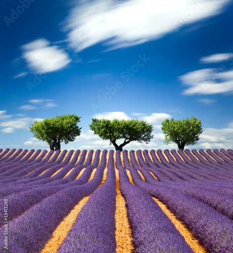Lavande Provence France / lavender field in Provence, France - 33413288