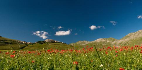 castelluccio di Norcia - Umbria - Italia