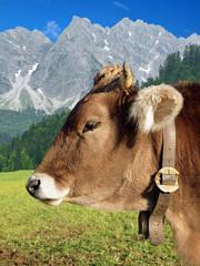 Kuh mit Alpen